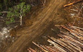 Roads to logging concessions in Pomio. Local Pomio landowners are protesting against the biggest land grab in PNG history. Under a lease system called SABLs (special agricultural and business leases) forests are being destroyed and customary land is being stolen.