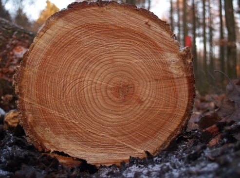 800px-tree_rings